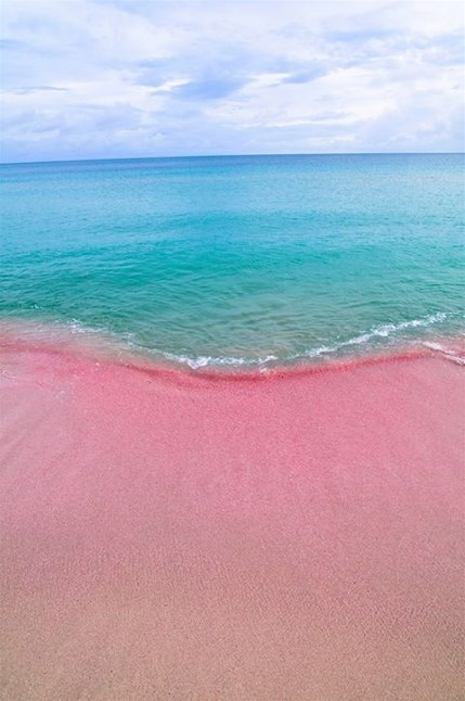 Pink sands beach harbour island bahamas google search on for Pink sand beaches bahamas