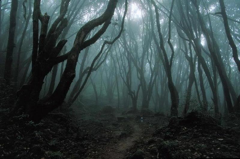floresta negra 1