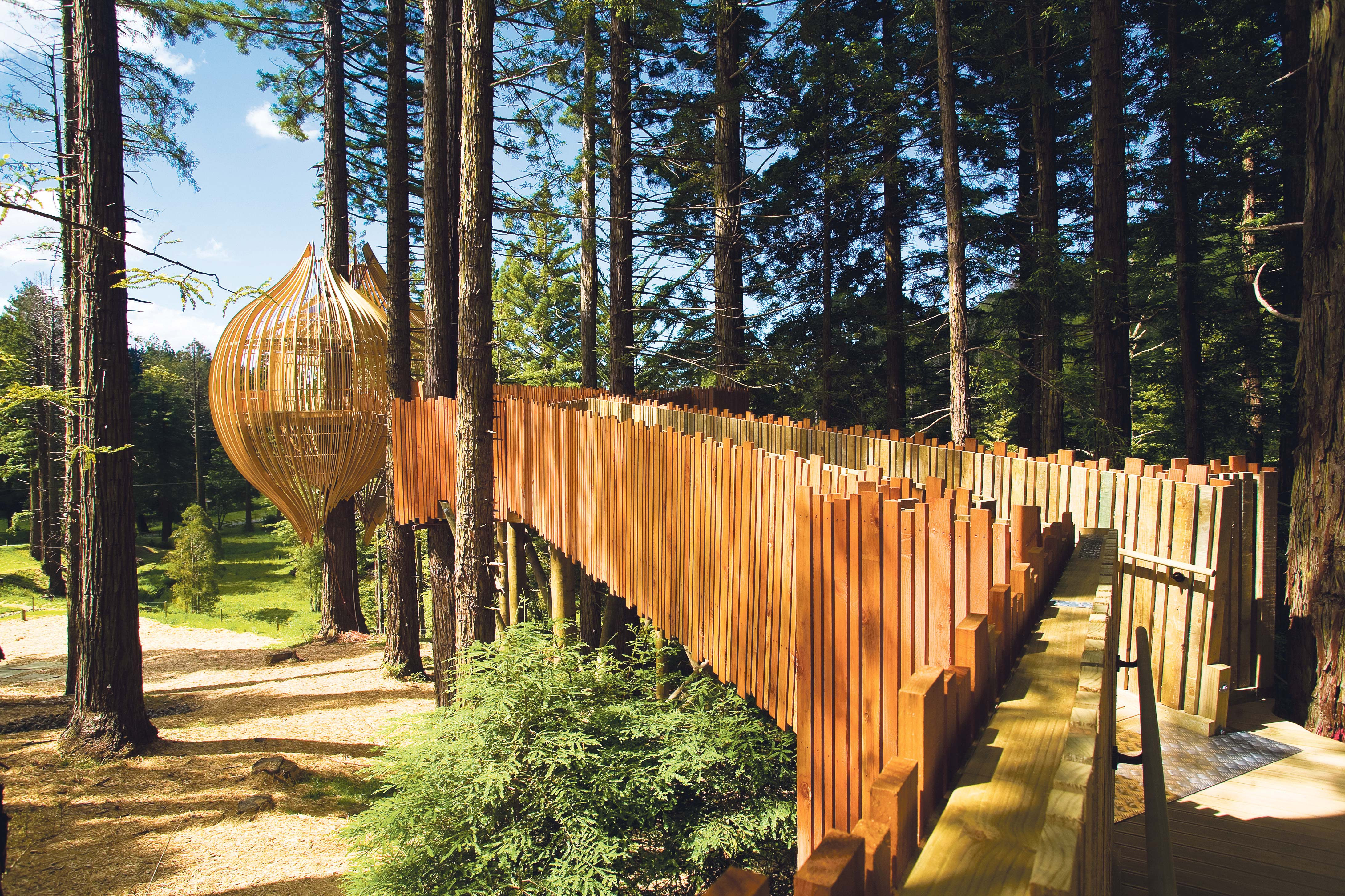 Redwoods-Treehouse-Day